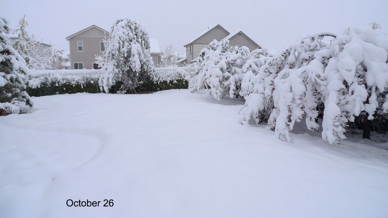 After-snow_34a_111026