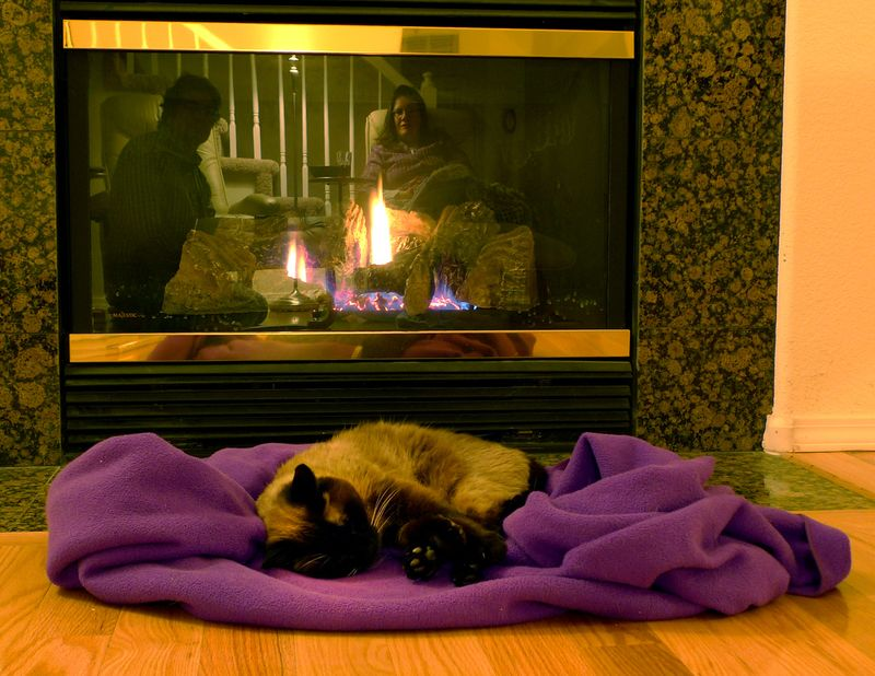 Cat_sleep_fireplace_757_120115